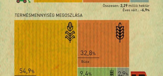 Kevesebb gabona, de emelkedő hozamok – infografika